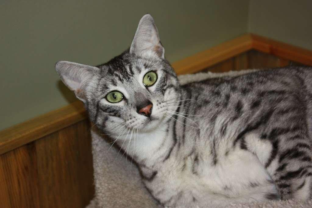 The Vets Animal Hospital - veterinary care    Photo 1 of 10   Address: 1295 Main St, Windsor, CO 80550, USA   Phone: (970) 686-5025