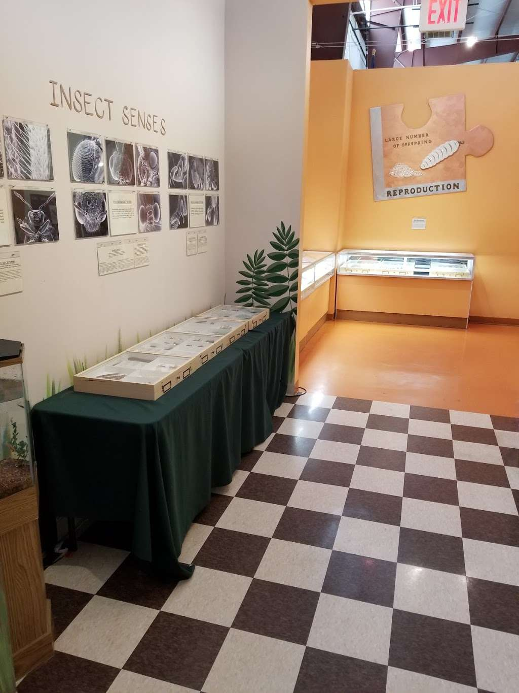 Insectropolis - museum  | Photo 6 of 10 | Address: 1761 U.S. 9, Toms River, NJ 08755, USA | Phone: (732) 349-7090