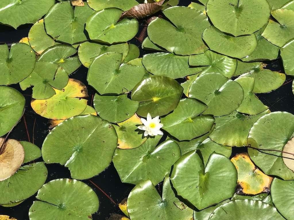 Ellanor C. Lawrence Park - park    Photo 8 of 10   Address: 5040 Walney Rd, Chantilly, VA 20151, USA   Phone: (703) 631-0013