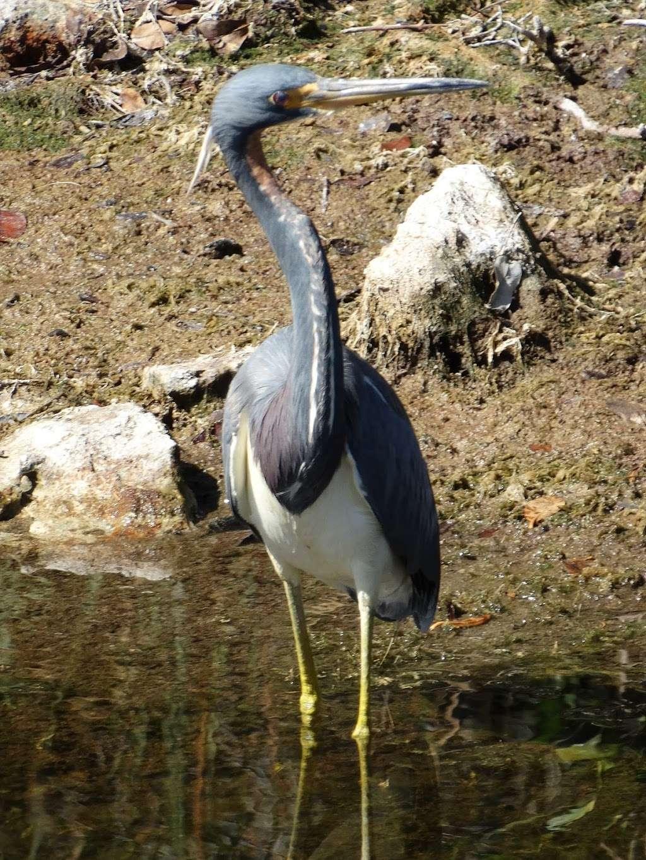 Blackpoint Wildlife Drive Entrance - park  | Photo 3 of 10 | Address: Blackpoint Wildlife Dr, Titusville, FL 32796, USA