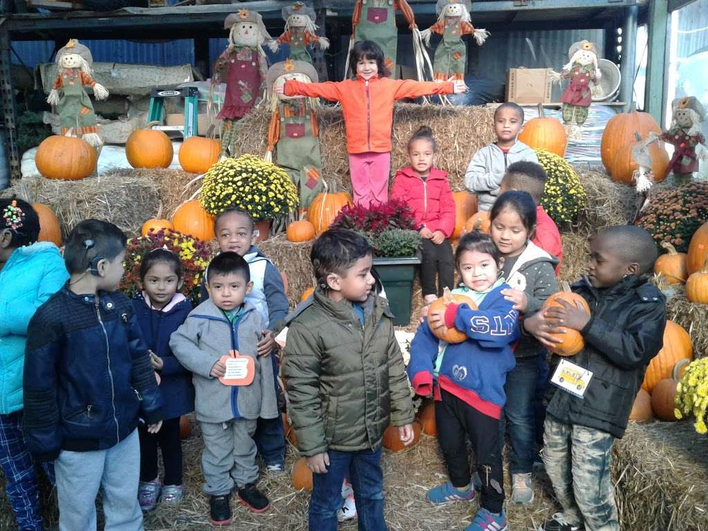 Vernis Garden Center - florist  | Photo 5 of 8 | Address: 22-22 Hazen St, East Elmhurst, NY 11370, USA | Phone: (718) 278-7348