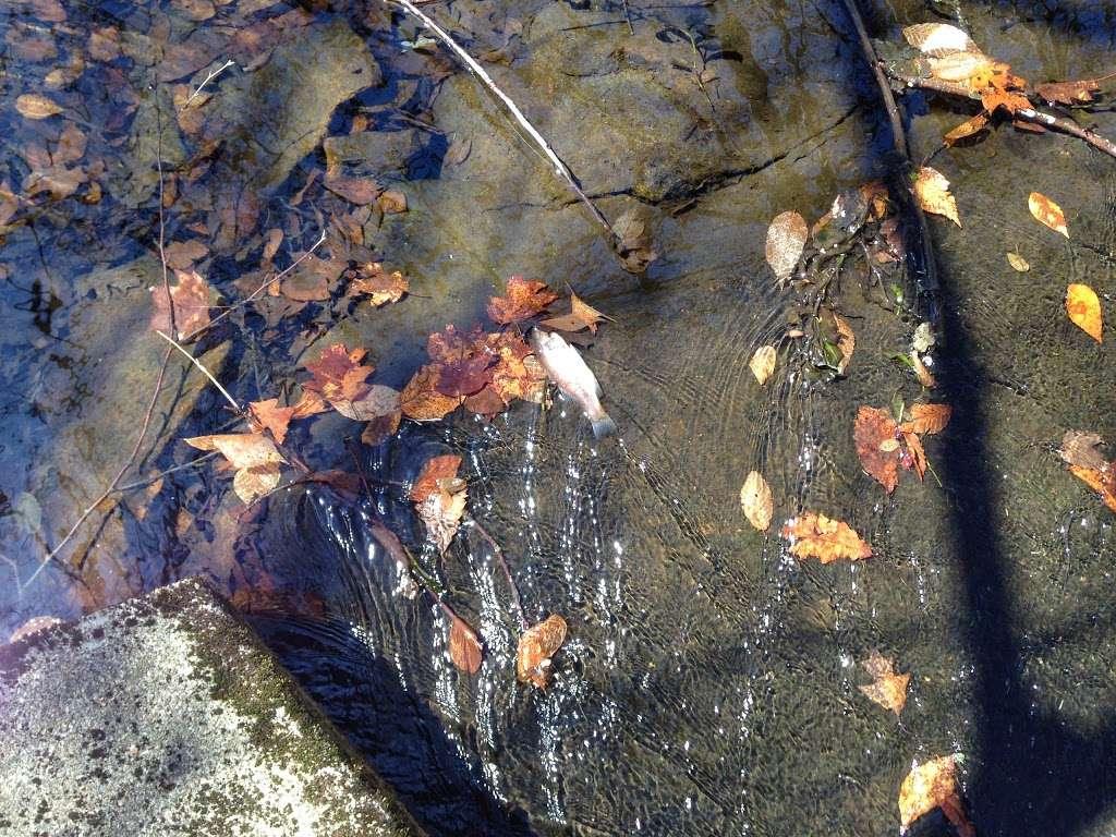 Wonder Lake - park  | Photo 10 of 10 | Address: 357 Mooney Hill Rd, Patterson, NY 12563, USA