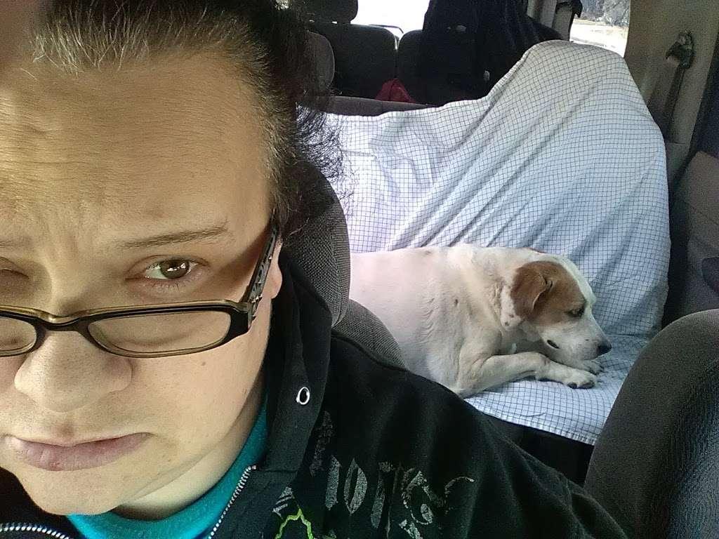 Animal Welfare League - pet store  | Photo 3 of 4 | Address: 6224 S Wabash Ave, Chicago, IL 60637, USA | Phone: (773) 667-0088