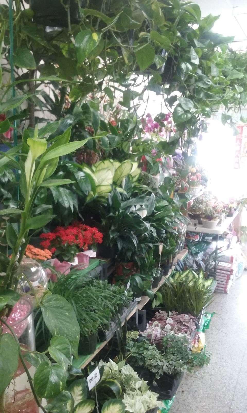 Creative Florist - florist    Photo 8 of 10   Address: 93-01 63rd Dr, Rego Park, NY 11374, USA   Phone: (718) 459-9292