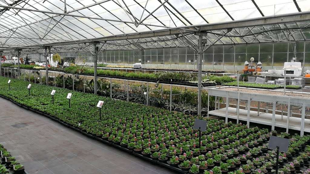 Matthews Plants - store  | Photo 8 of 10 | Address: Hadley Nursery, Tylers Rd, Roydon, Harlow CM19 5LJ, UK | Phone: 01279 793539