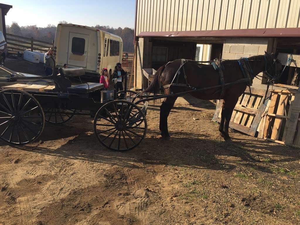 Amish meat John Wye - store  | Photo 4 of 10 | Address: 37404 Westham Ln, Mechanicsville, MD 20659, USA | Phone: (240) 707-1269