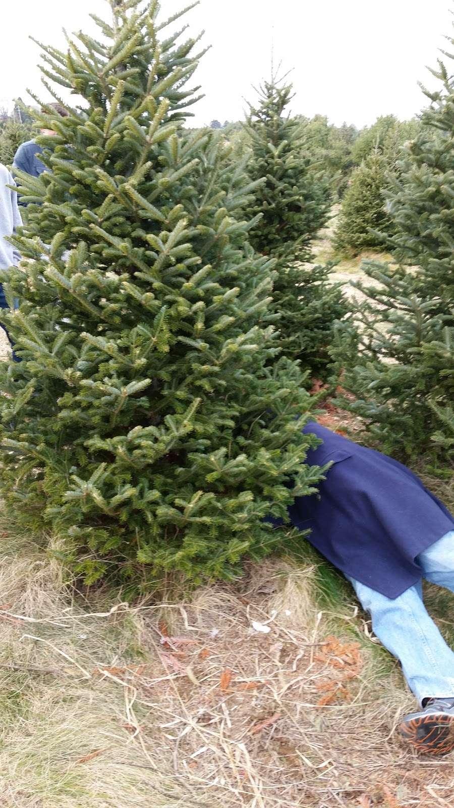 Family Tree Farm, LLC - store  | Photo 5 of 10 | Address: 4688 Dairy Rd, Red Lion, PA 17356, USA | Phone: (717) 332-6365