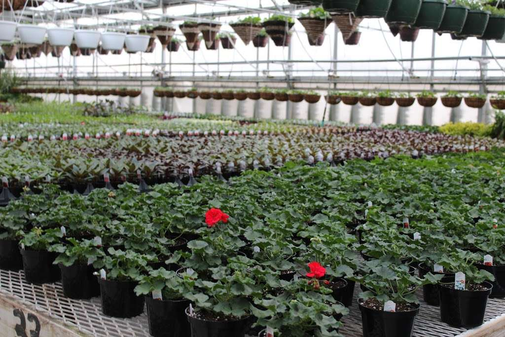 Shady Grove Greenhouse - store    Photo 6 of 10   Address: 122 Little Britain Rd, Nottingham, PA 19362, USA   Phone: (717) 529-3770