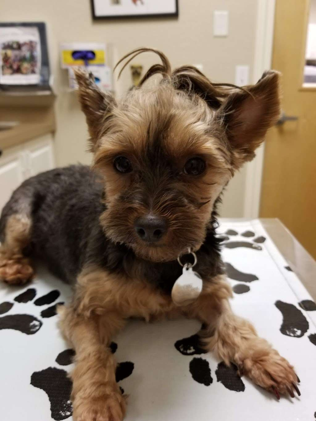 Orchid Springs Animal Hospital - veterinary care  | Photo 6 of 10 | Address: 615 Overlook Dr, Winter Haven, FL 33884, USA | Phone: (863) 777-5600