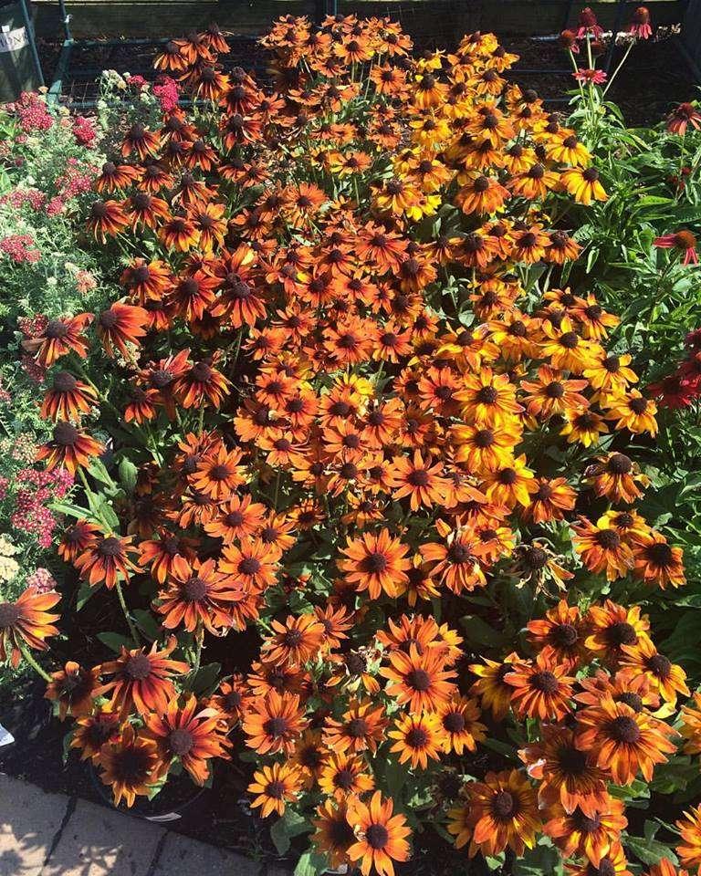 Lisena Garden Center & Nursery - store    Photo 1 of 7   Address: 12-5 Cross Bay Blvd, Broad Channel, NY 11693, USA   Phone: (718) 607-5413