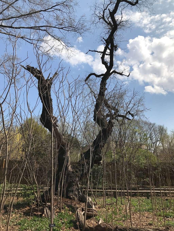 Shakespeare Garden - park  | Photo 1 of 8 | Address: 990 Washington Ave, Brooklyn, NY 11225, USA | Phone: (718) 623-7200