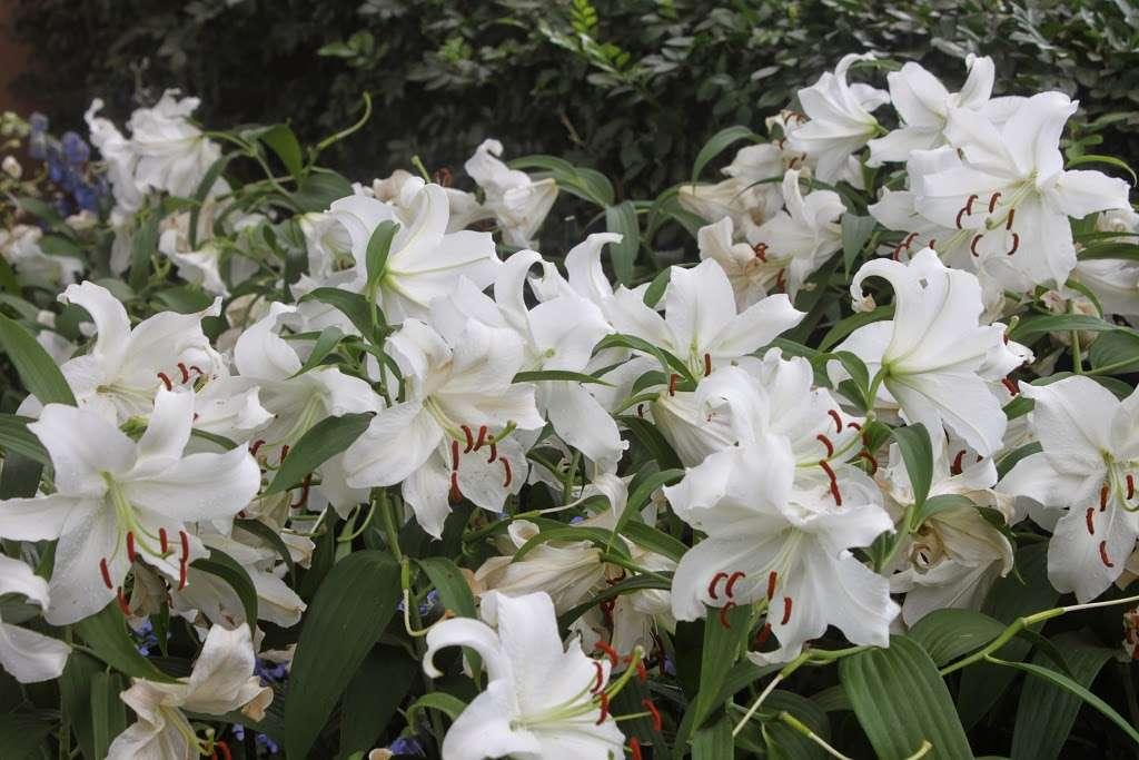 The Jane Watson Irwin Perennial Garden - park  | Photo 2 of 10 | Address: 2900 Southern Blvd, The Bronx, NY 10458, USA | Phone: (718) 817-8700