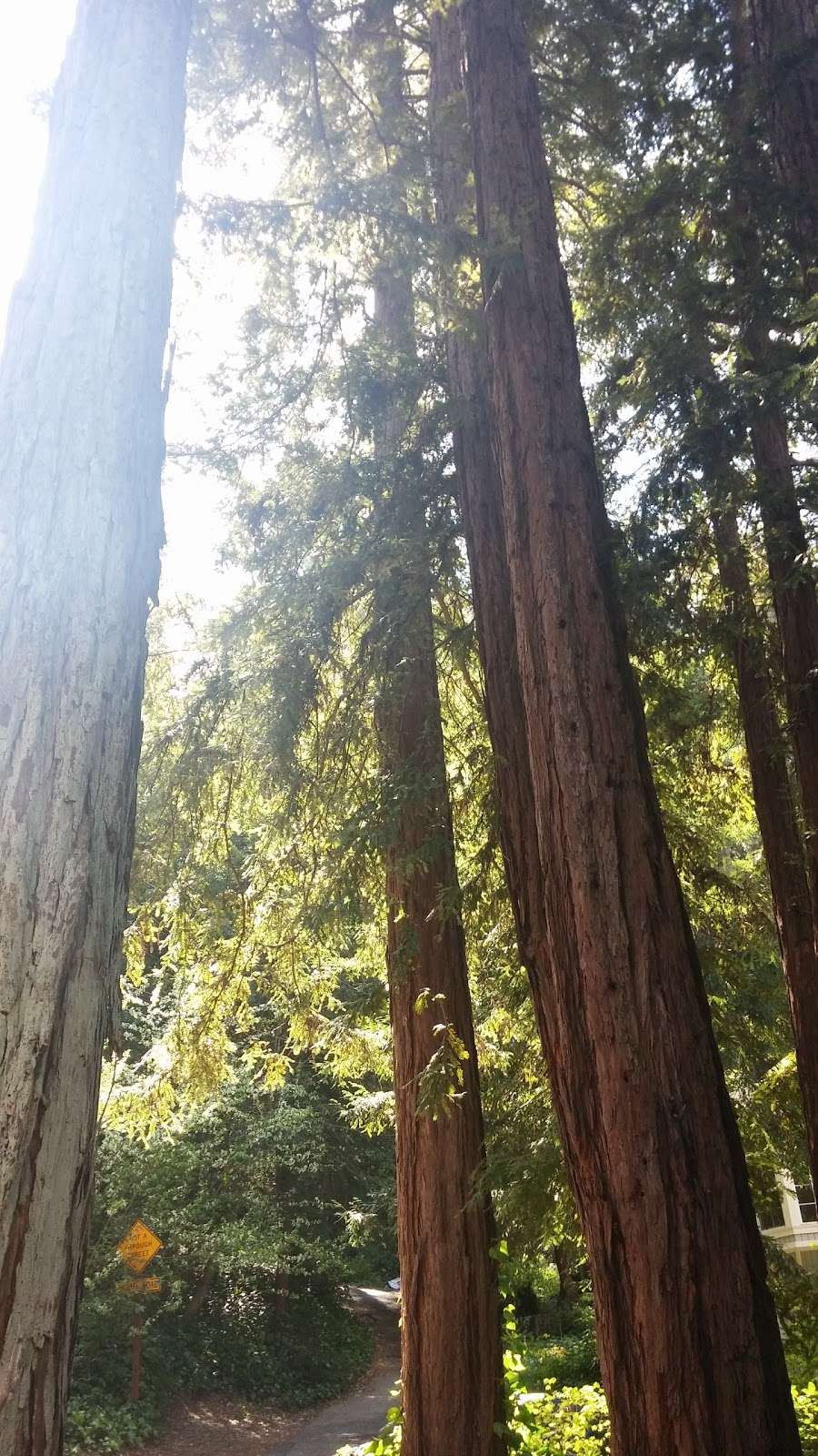Forest Springs Improvement & Maintenance - park  | Photo 4 of 5 | Address: 401 Acorn Dr, Boulder Creek, CA 95006, USA | Phone: (831) 338-7134