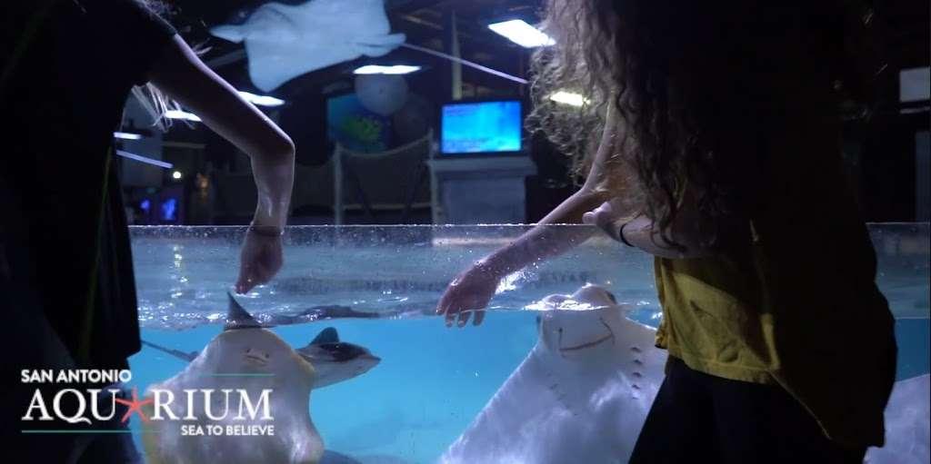 San Antonio Aquarium - aquarium  | Photo 1 of 10 | Address: 6320 Bandera Rd, Leon Valley, TX 78238, USA | Phone: (210) 310-3210