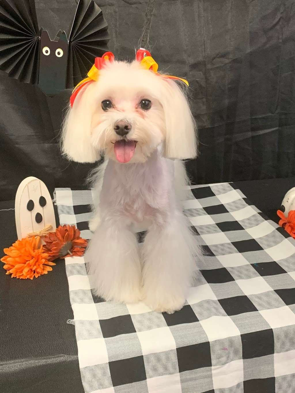 S&S Family Pet Hospital - veterinary care  | Photo 8 of 10 | Address: 15714 Huebner Rd, San Antonio, TX 78248, USA | Phone: (210) 579-0518