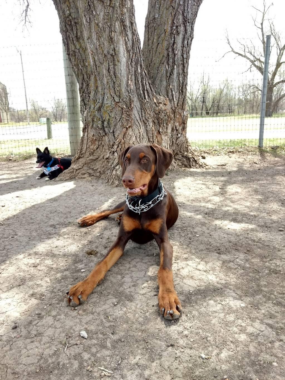 Meridian Dog Park - park    Photo 8 of 9   Address: 2127 N Meridian Ave, Wichita, KS 67203, USA   Phone: (316) 268-4361