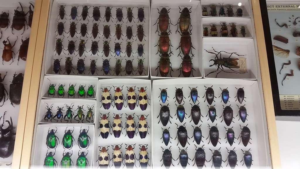 Insectropolis - museum  | Photo 2 of 10 | Address: 1761 U.S. 9, Toms River, NJ 08755, USA | Phone: (732) 349-7090