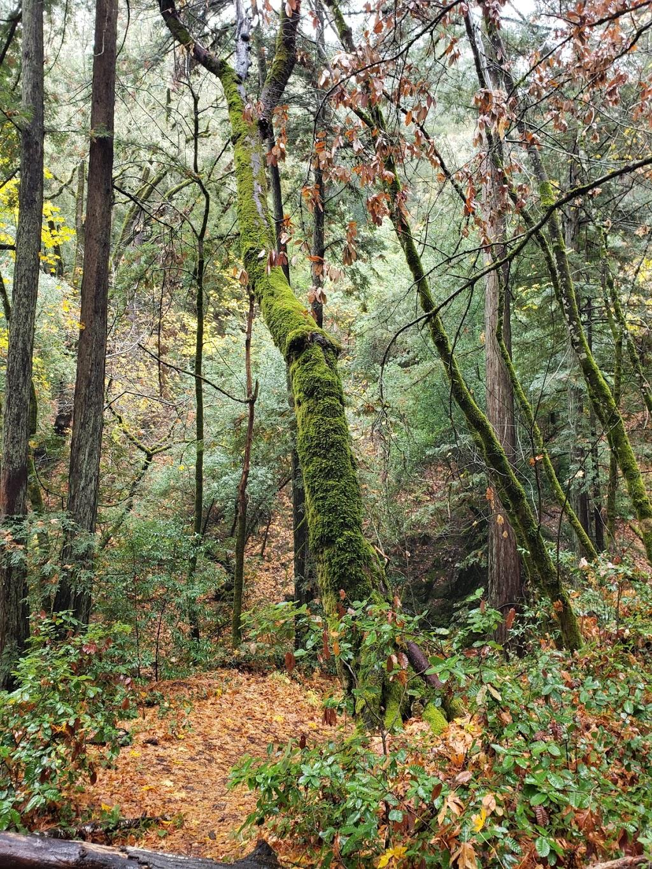 Sam Trail - park  | Photo 8 of 10 | Address: 15808 Sanborn Rd, Saratoga, CA 95070, USA