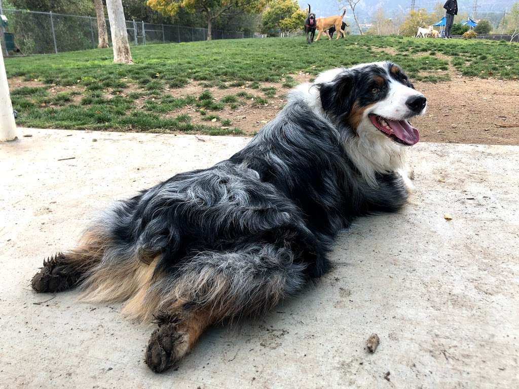 Whitaker Dog Care - park  | Photo 7 of 10 | Address: 1723 Evergreen St, Burbank, CA 91505, USA | Phone: (310) 987-9991