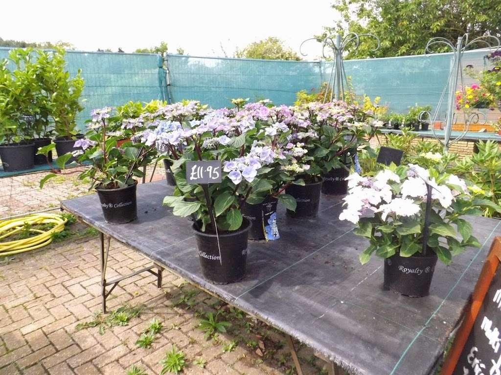 Abridge Garden Centre - florist  | Photo 7 of 10 | Address: Ongar Rd, Abridge, Romford RM4 1AA, UK | Phone: 01708 688558