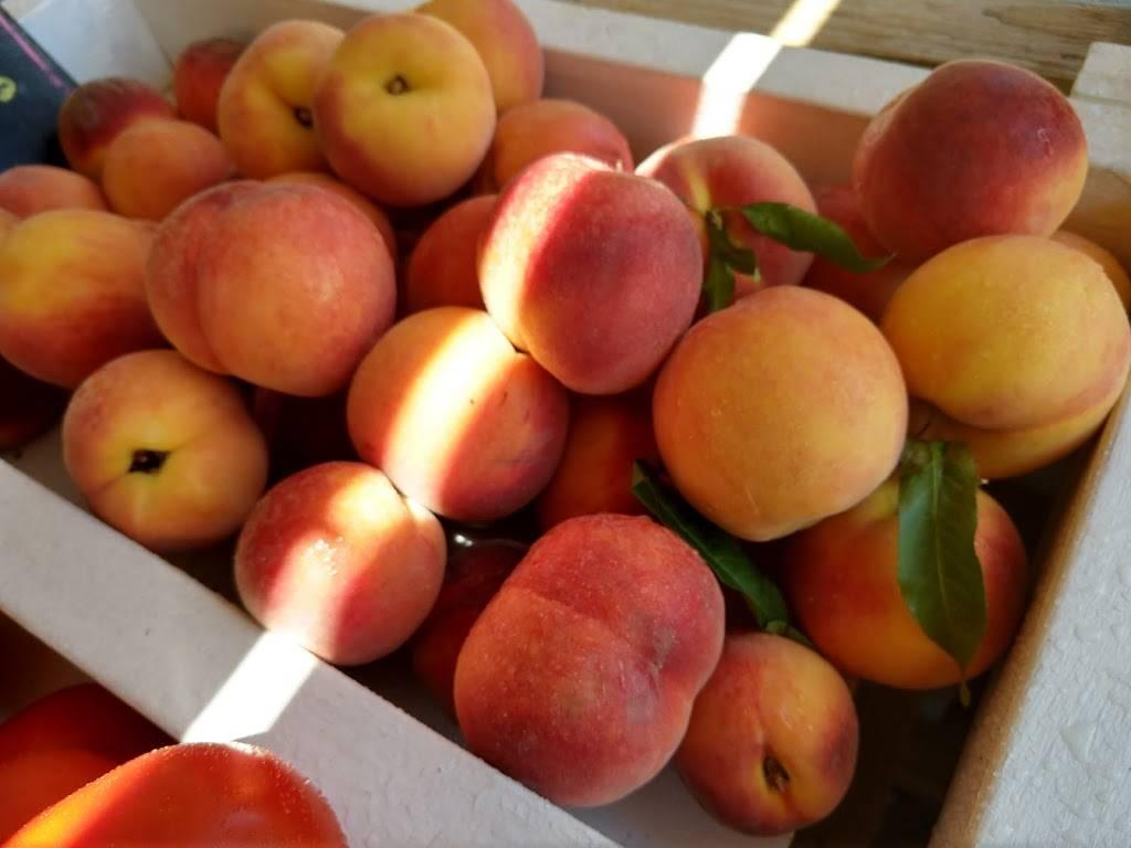The Citrus Tree - home goods store  | Photo 3 of 8 | Address: 10031 Corbett Rd, Cincinnati, OH 45231, USA | Phone: (513) 313-3638