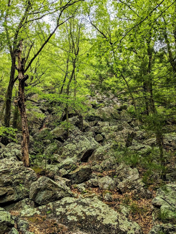 Rocky Knob Trail Head - park  | Photo 10 of 10 | Address: Ridge Rd, Shippensburg, PA 17257, USA | Phone: (717) 352-2211