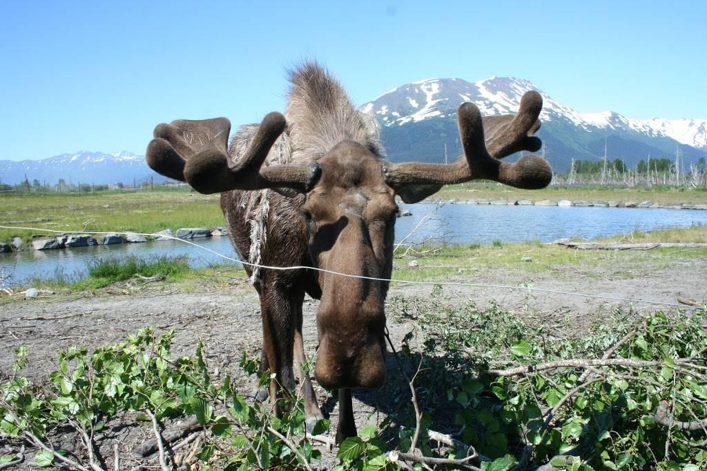 Alderwood Park - park  | Photo 8 of 10 | Address: 707 Elm St, Anchorage, AK 99501, USA | Phone: (907) 343-4355