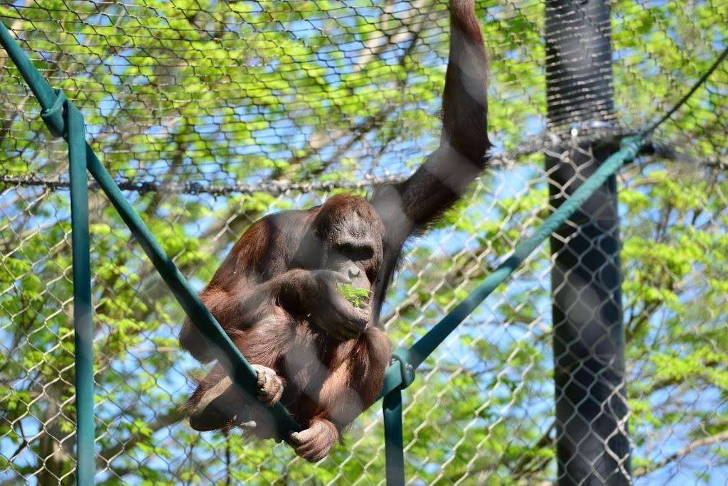Hubbard Orangutan Forest - zoo    Photo 7 of 9   Address: 2119170000, Omaha, NE 68108, USA   Phone: (402) 733-8401