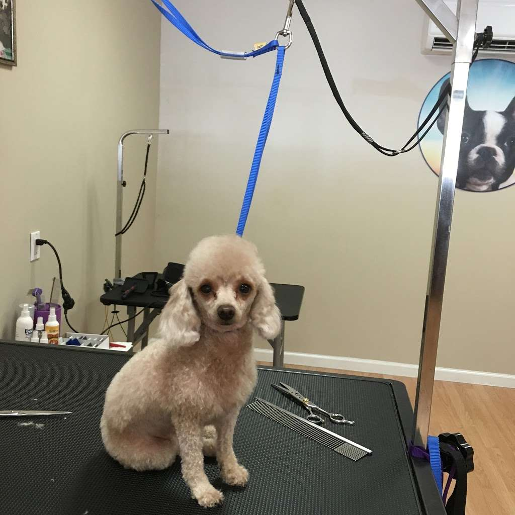 Pets Wonder Grooming - pet store  | Photo 7 of 10 | Address: 64-71 Dry Harbor Rd, Middle Village, NY 11379, USA | Phone: (718) 894-0163