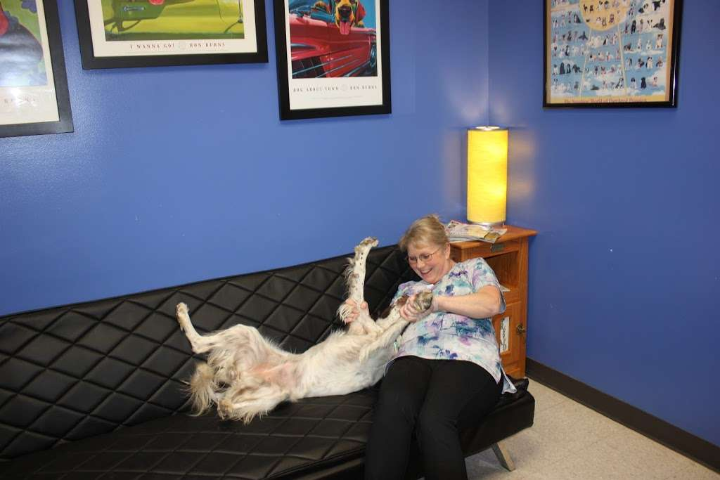 The Vets Animal Hospital - veterinary care    Photo 8 of 10   Address: 1295 Main St, Windsor, CO 80550, USA   Phone: (970) 686-5025