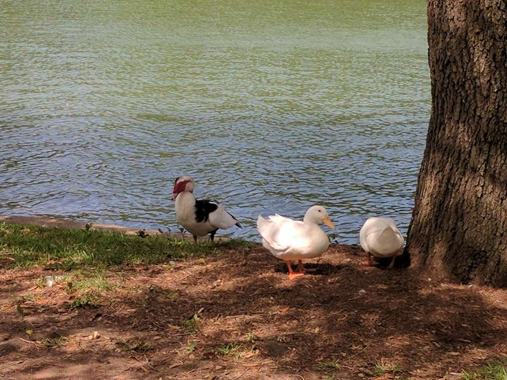 Pecan Park - park  | Photo 3 of 9 | Address: Pecan Orchard Blvd, Sugar Land, TX 77479, USA | Phone: (281) 565-0616