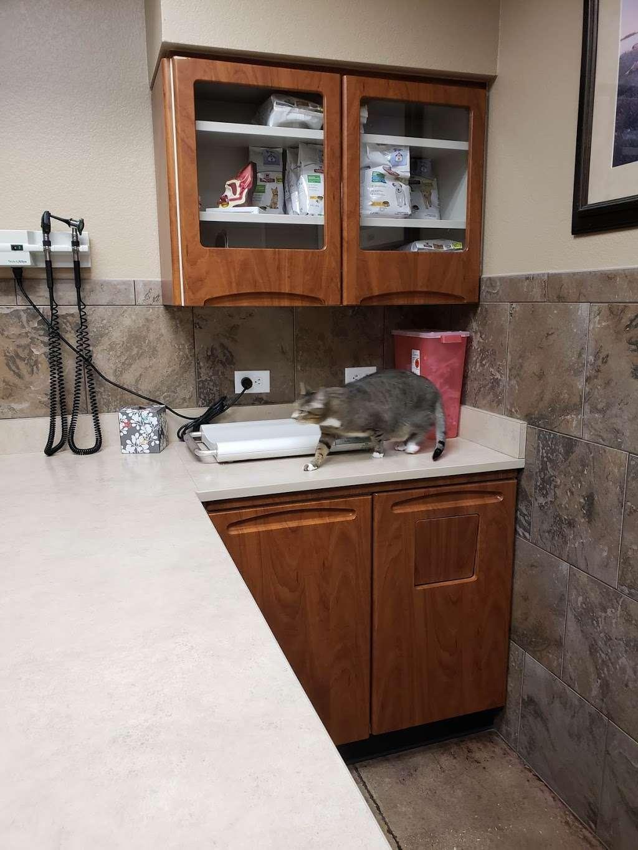 DeZavala-Shavano Veterinary Clinic - veterinary care  | Photo 2 of 10 | Address: 4408 Lockhill Selma Rd, San Antonio, TX 78249, USA | Phone: (210) 699-3939