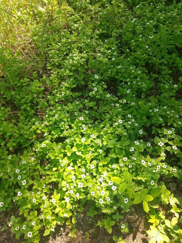 Arnold L. Muldoon Park - park  | Photo 8 of 8 | Address: 7600 E Northern Lights Blvd, Anchorage, AK 99504, USA | Phone: (907) 343-4355