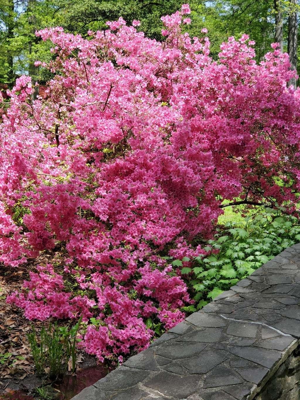 Bronx Botanical Garden - museum  | Photo 6 of 10 | Address: The Bronx, NY 10458, USA | Phone: (718) 817-8700