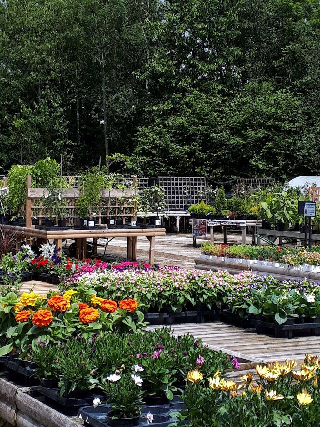 Buckland Nurseries Garden Centre - store  | Photo 4 of 10 | Address: Reigate Rd, Reigate, Betchworth RH2 9RE, UK | Phone: 01737 242990