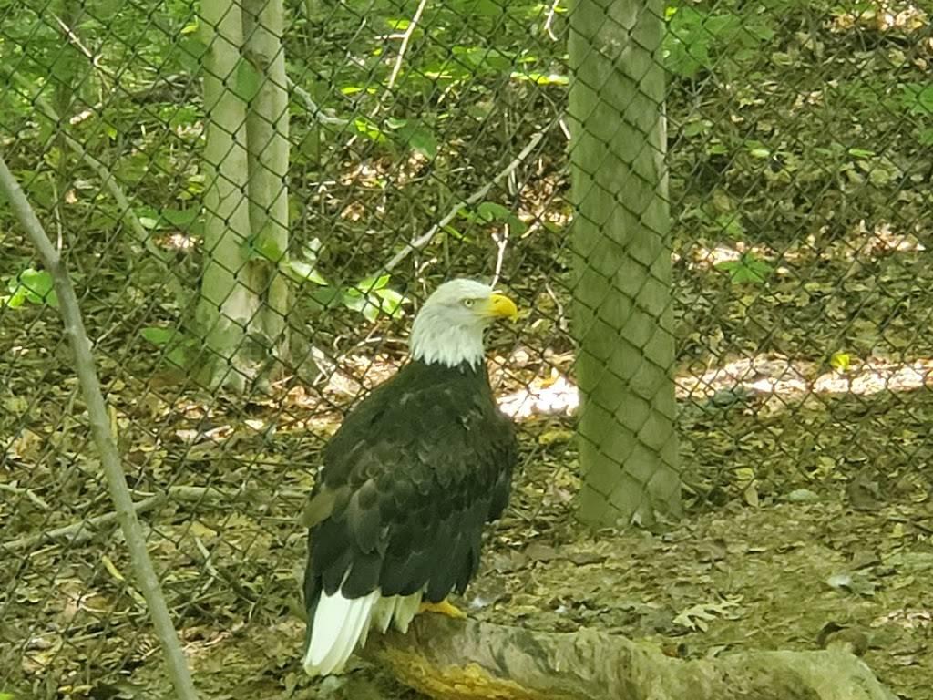 Virginia Living Museum - zoo  | Photo 7 of 9 | Address: 524 J Clyde Morris Blvd, Newport News, VA 23601, USA | Phone: (757) 595-1900