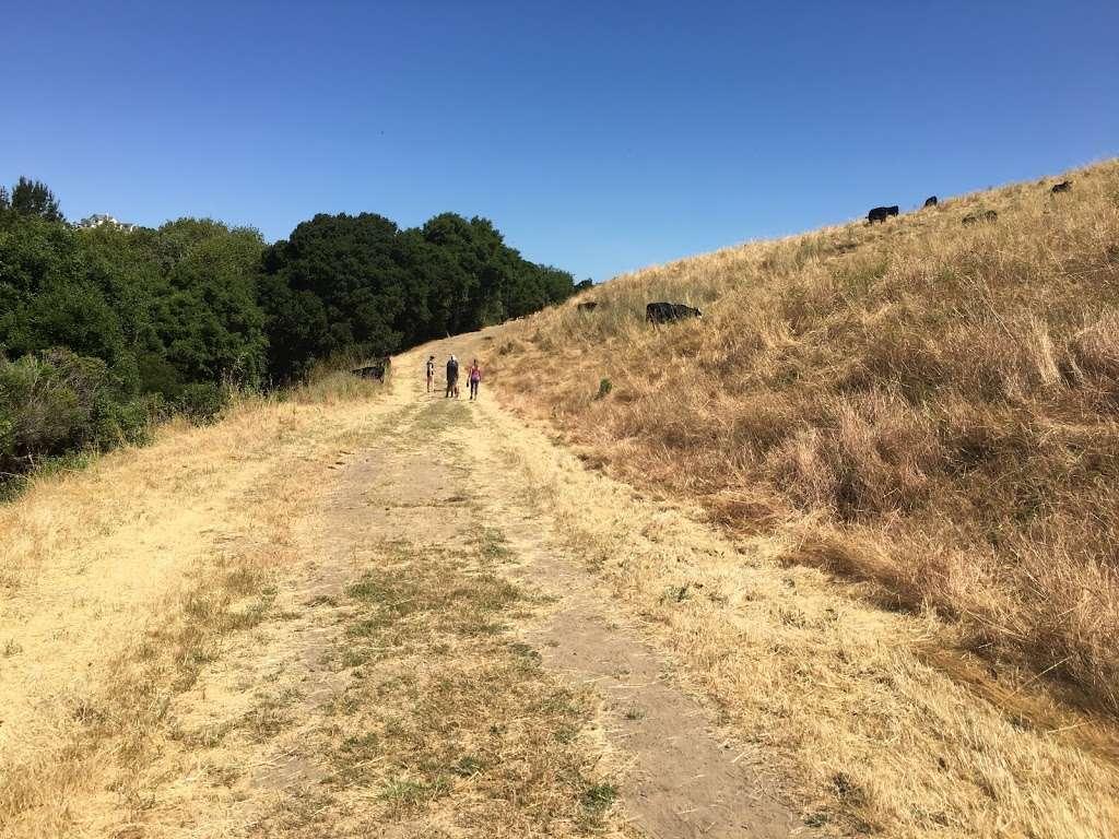 Rancho Laguna Park - park  | Photo 9 of 10 | Address: 2101 Camino Pablo, Moraga, CA 94556, USA | Phone: (925) 376-2520