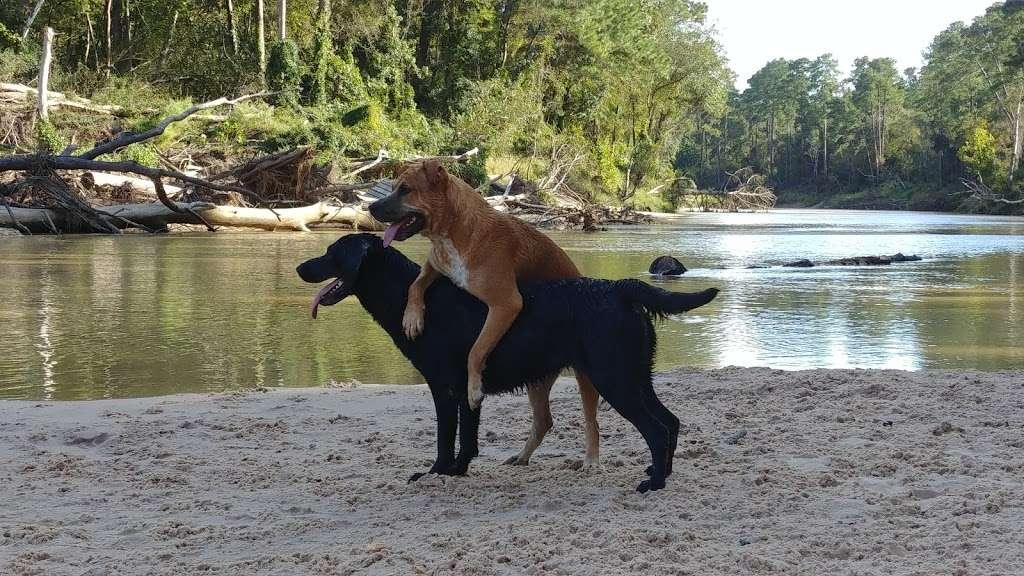 Bibi & Mini-Me Bush Dog Park - park  | Photo 3 of 10 | Address: 4129 Spring Creek Dr, Spring, TX 77373, USA | Phone: (281) 353-8100