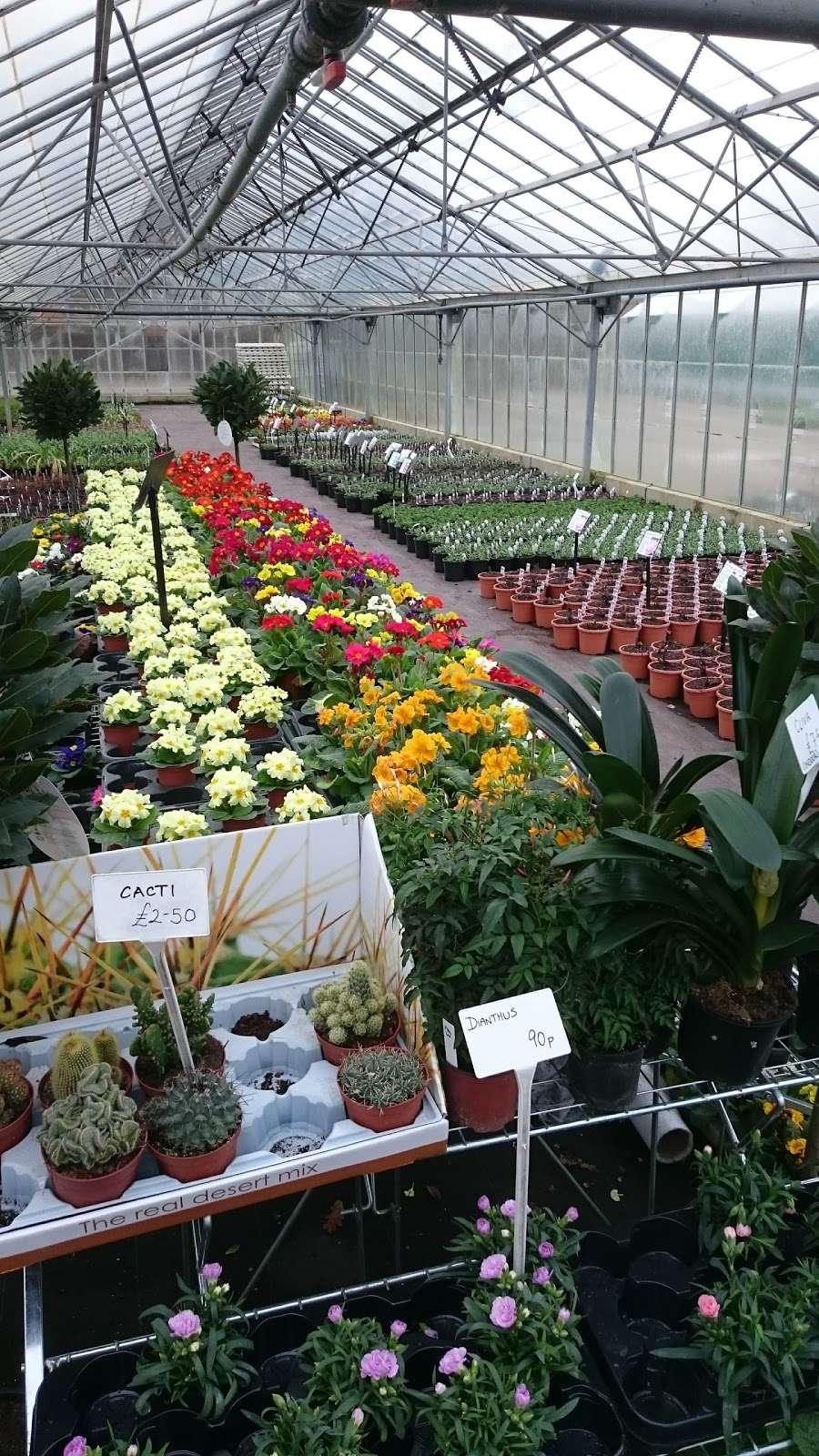 Matthews Plants - store  | Photo 9 of 10 | Address: Hadley Nursery, Tylers Rd, Roydon, Harlow CM19 5LJ, UK | Phone: 01279 793539