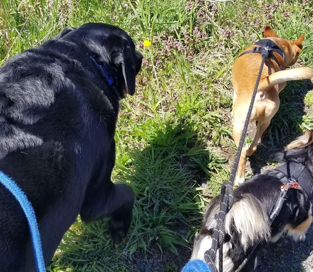 Welcome Home Doggy Daycare - park  | Photo 5 of 10 | Address: 16 Parkview Terrace, Bayonne, NJ 07002, USA | Phone: (201) 890-3347