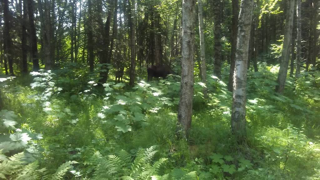 Point Woronzof Park - park  | Photo 3 of 10 | Address: 7251 Point Woronzof Drive, Anchorage, AK 99517, USA | Phone: (907) 343-7529