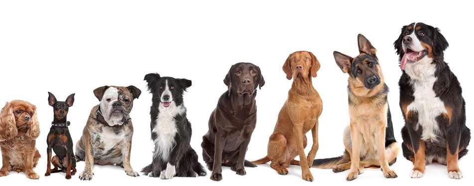 Dawg Tees, LLC - store  | Photo 2 of 5 | Address: 1680 Kinsale Ct, Melbourne, FL 32940, USA | Phone: (321) 266-7265