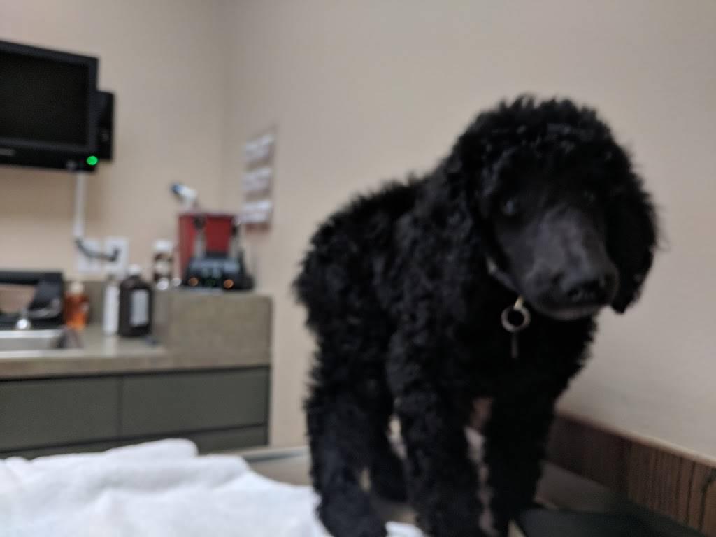 Porter John DVM - veterinary care  | Photo 2 of 2 | Address: 38 S Kirkman Rd, Orlando, FL 32811, USA | Phone: (407) 297-7528