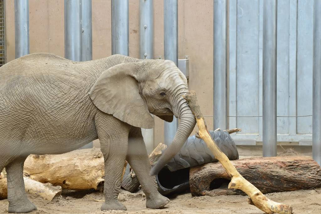 Elephant Amphitheater - zoo    Photo 1 of 10   Address: 3901-, 3999 S River Dr, Omaha, NE 68108, USA   Phone: (402) 733-8400