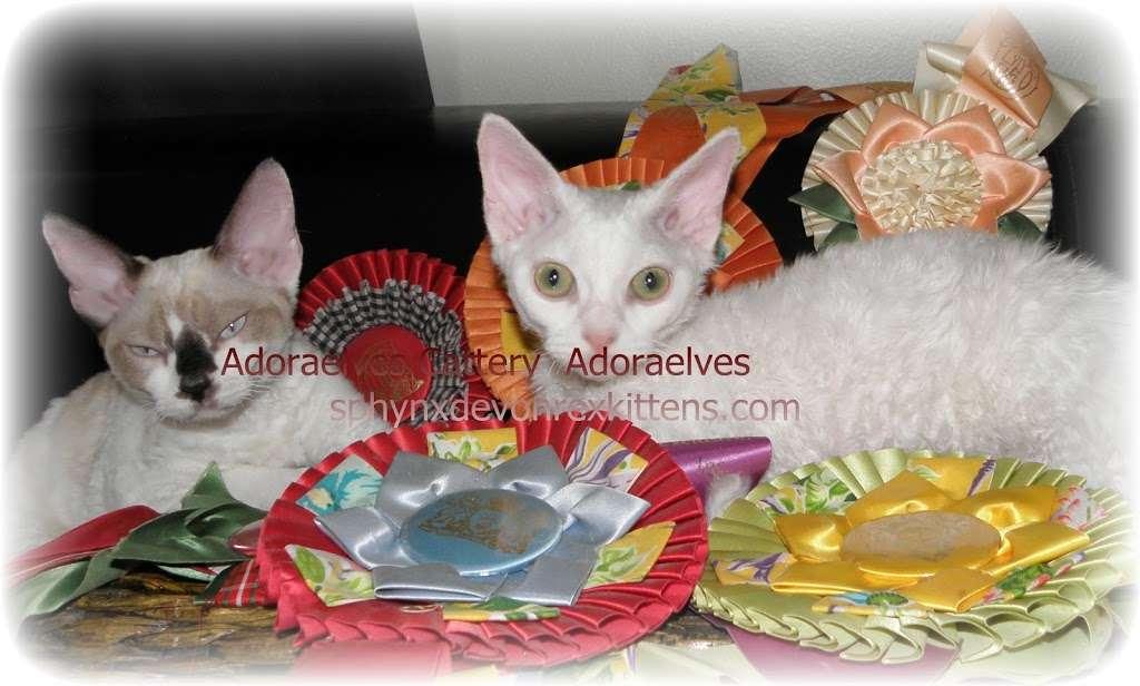 Sphynx cats & Devon Rex Kittens Merit award Winning Cattery - veterinary care  | Photo 2 of 10 | Address: 15673 Southern Blvd #107, Loxahatchee Groves, FL 33470, USA | Phone: (561) 396-6290
