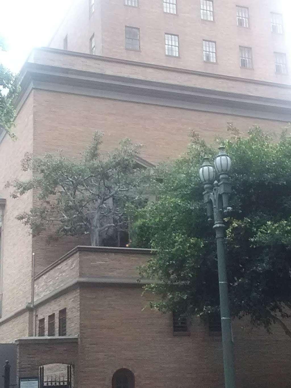 Junipero Serra Branch Library - library  | Photo 3 of 8 | Address: 4607 S Main St, Los Angeles, CA 90037, USA | Phone: (323) 234-1685