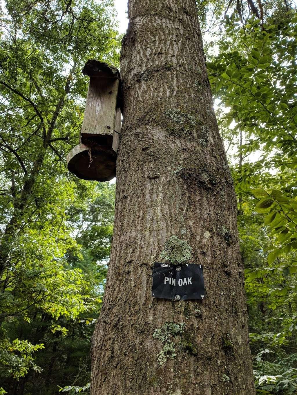 Leonard Schine Preserve & Childrens Natural Playground - museum  | Photo 4 of 10 | Address: 27-99 Glendinning Pl, Westport, CT 06880, USA