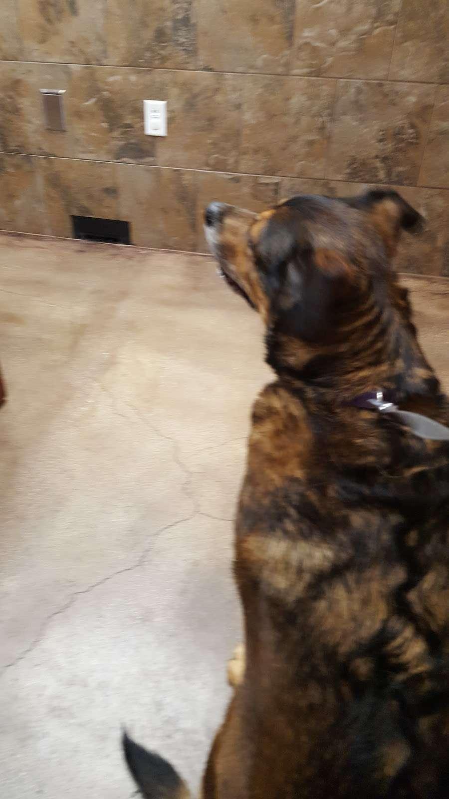 DeZavala-Shavano Veterinary Clinic - veterinary care  | Photo 6 of 10 | Address: 4408 Lockhill Selma Rd, San Antonio, TX 78249, USA | Phone: (210) 699-3939