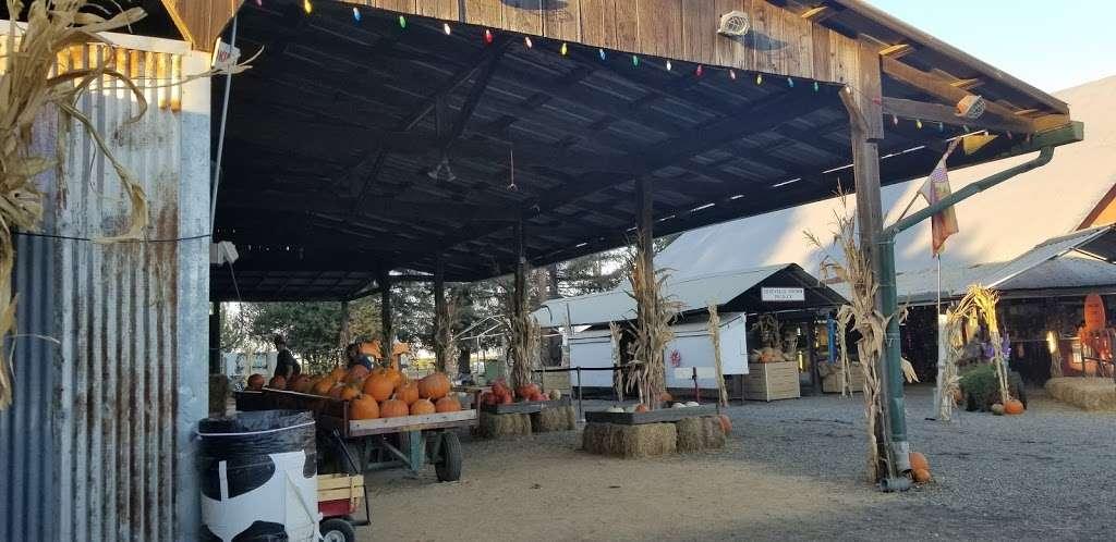 Silveyville Christmas Tree and Pumpkin Farm - store  | Photo 7 of 9 | Address: 6248 Silveyville Rd, Dixon, CA 95620, USA | Phone: (707) 678-1823