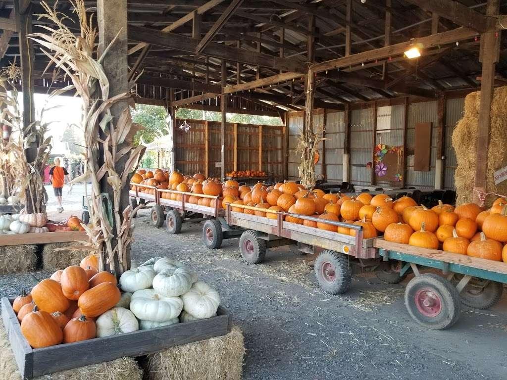 Silveyville Christmas Tree and Pumpkin Farm - store  | Photo 2 of 9 | Address: 6248 Silveyville Rd, Dixon, CA 95620, USA | Phone: (707) 678-1823